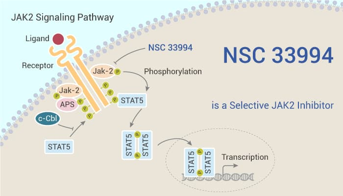 NSC 33994 is a Selective JAK2 Inhibitor 2021 02 18 - NSC 33994 is a Selective JAK2 Inhibitor