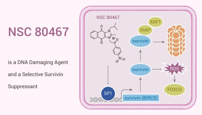 NSC 80467 is a DNA Damaging Agent and a Selective Survivin Suppressant 2020 01 12 - NSC 80467 is a DNA Damaging Agent and a Selective Survivin Suppressant