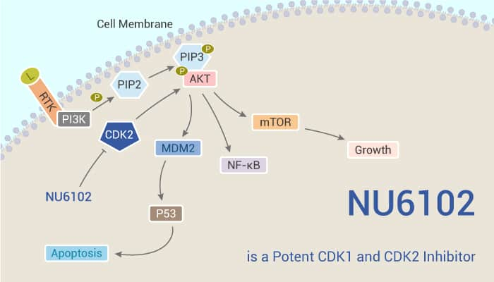 NU6102 is a Potent CDK1 and CDK2 Inhibitor 2020 01 21 - NU6102 is a Potent CDK1 and CDK2 Inhibitor