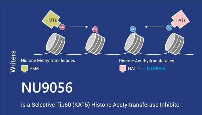 NU9056 is a Selective Tip60 KAT5 Histone Acetyltransferase Inhibitor 2021 06 16 - NU9056 is a Selective Tip60 (KAT5) Histone Acetyltransferase Inhibitor
