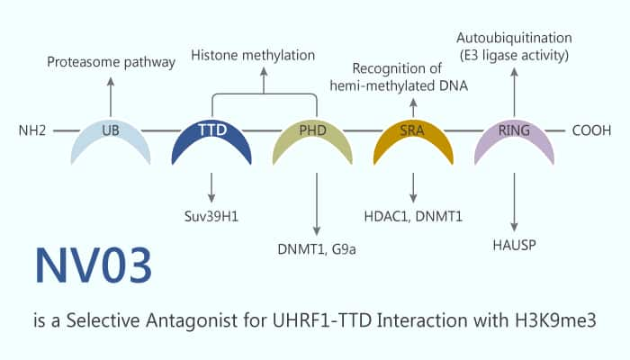 NV03 is a Selective Antagonist for UHRF1 TTD Interaction with H3K9me3 2019 10 16 - NV03 is a Selective Antagonist for UHRF1-TTD Interaction with H3K9me3