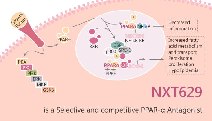 NXT629 is a Selective and Competitive PARα Antagonist 2019 08 18 - NXT629 is a Selective and Competitive PPARα Antagonist