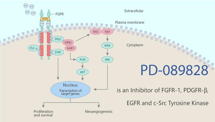 PD 089828 is an Inhibitor of FGFR 1 PDGFR β EGFR and c Src Tyrosine Kinase 2020 06 06 - PD-089828 is an Inhibitor of FGFR-1, PDGFR-β, EGFR and c-Src Tyrosine Kinase