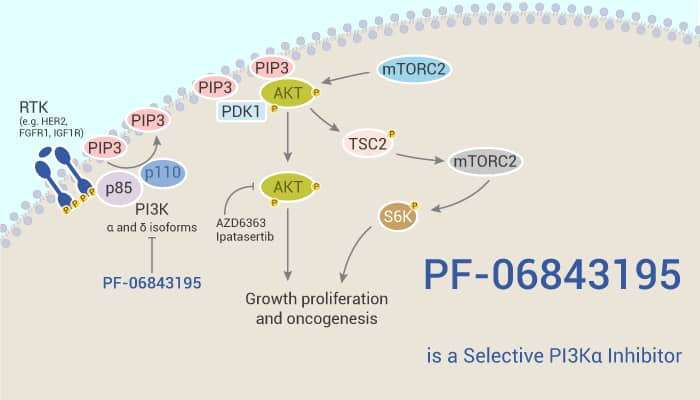 PF 06843195 is a Selective PI3Kα Inhibitor 2021 02 25 - PF-06843195 is a Selective PI3Kα Inhibitor