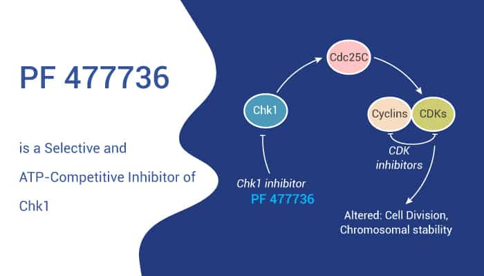 PF 477736 is a Selective and ATP Competitive Inhibitor of Chk1 2021 02 13 - PF 477736 is a Selective and ATP-Competitive Inhibitor of Chk1