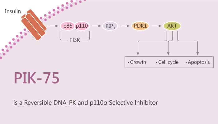 PIK 75 is a Reversible DNA PK and p110α Selective Inhibitor 2020 05 02 - PIK-75 is a Reversible DNA-PK and p110α Selective Inhibitor