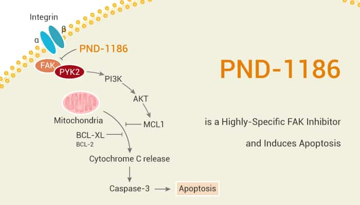 PND 1186 is a Highly Specific FAK Inhibitor and Induces Apoptosis 2020 12 26 - PND-1186 is a Highly-Specific FAK Inhibitor and Induces Apoptosis
