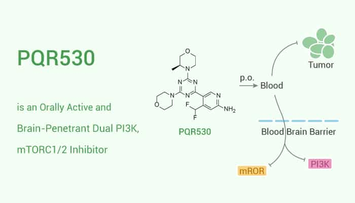PQR530 is an Orally Active and Brain Penetrant Dual PI3K mTORC12 Inhibitor 2020 11 28 - PQR530 is an Orally Active and Brain-Penetrant Dual PI3K, mTORC1/2 Inhibitor