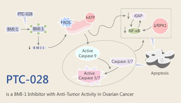PTC 028 is an Inhibitor of BMI 1 with activity in Ovarian Cancer 2019 07 05 - PTC-028 is an Inhibitor of BMI-1 with Activity in Ovarian Cancer