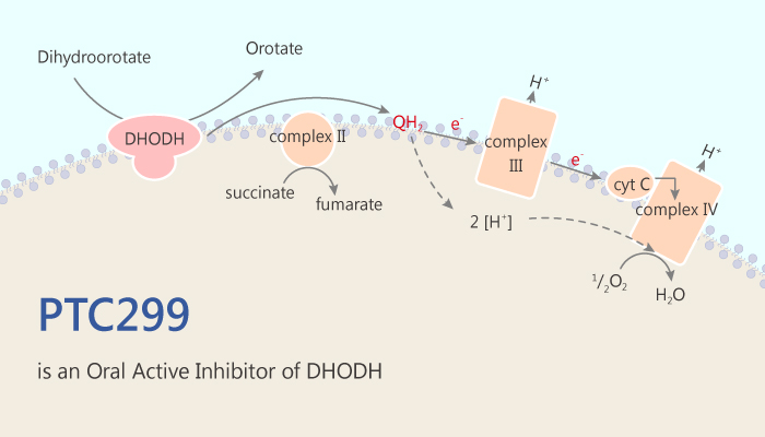 PTC299 is an Oral Active and Dual Inhibitor of DHODH and VEGF 2019 06 25 - PTC299 is an Oral Active and Dual Inhibitor of DHODH and VEGF