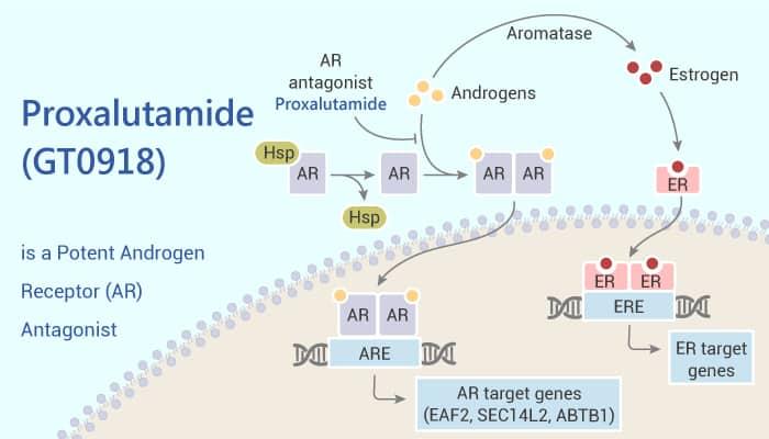 Proxalutamide GT0918 is a potent Androgen Receptor AR Antagonist 2021 07 07 - Proxalutamide (GT0918) is a Potent Androgen Receptor (AR) Antagonist