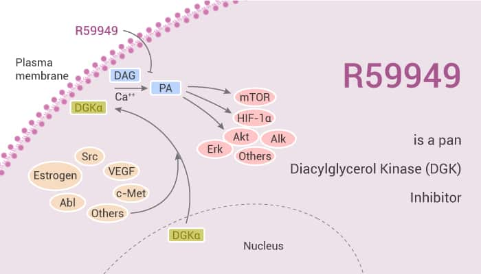 R59949 is a pan Diacylglycerol Kinase DGK Inhibitor 2020 01 14 - R59949 is a pan Diacylglycerol Kinase (DGK) Inhibitor