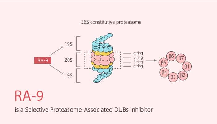 RA 9 is a Selective Proteasome Associated DUBs Inhibitor 2020 06 30 - RA-9 is a Selective Proteasome-Associated DUBs Inhibitor