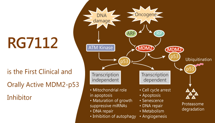 RG7112 is the First Clinical and Orally Active MDM2 p53 Inhibitor 2019 08 28 - RG7112 is the First Clinical and Orally Active MDM2-p53 Inhibitor