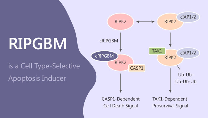 RIPGBM a Selective Inducer of Apoptosis in Glioblastoma Multiforme Cancer Stem Cells 2019 05 30 - RIPGBM is a Selective Inducer of Apoptosis in Glioblastoma Multiforme Cancer Stem Cells