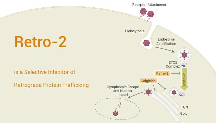 Retro 2 is a Selective Inhibitor of Retrograde Protein Trafficking 2021 04 14 - Retro-2 is a Selective Inhibitor of Retrograde Protein Trafficking