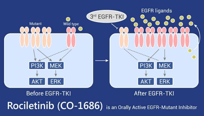 Rociletinib CO 1686 is an Orally Active EGFR Mutant Inhibitor 2021 06 30 - Rociletinib (CO-1686) is an Orally Active EGFR-Mutant Inhibitor