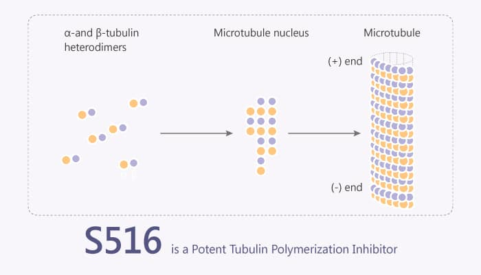S516 is a Potent Tubulin Polymerization Inhibitor 2019 11 25 - S516 is a Potent Tubulin Polymerization Inhibitor