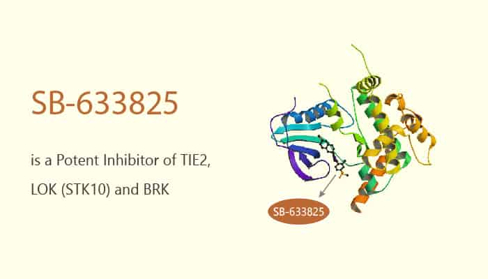 SB 633825 is a Potent Inhibitor of TIE2 LOK STK10 and BRK 2020 05 13 - SB-633825 is a Potent Inhibitor of TIE2, LOK (STK10) and BRK