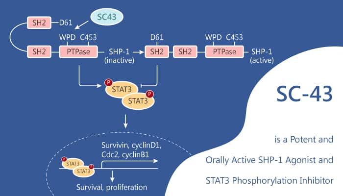 SC 43 is a Potent and Orally Active SHP 1 Agonist and STAT3 Phosphorylation Inhibitor 2020 08 15 - SC-43 is a Potent and Orally Active SHP-1 Agonist and STAT3 Phosphorylation Inhibitor