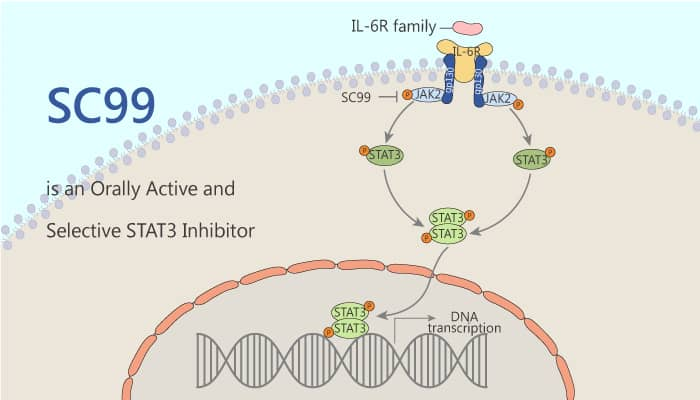 SC99 is an Orally Active and Selective STAT3 Inhibitor 2020 09 16 - SC99 is an Orally Active and Selective STAT3 Inhibitor