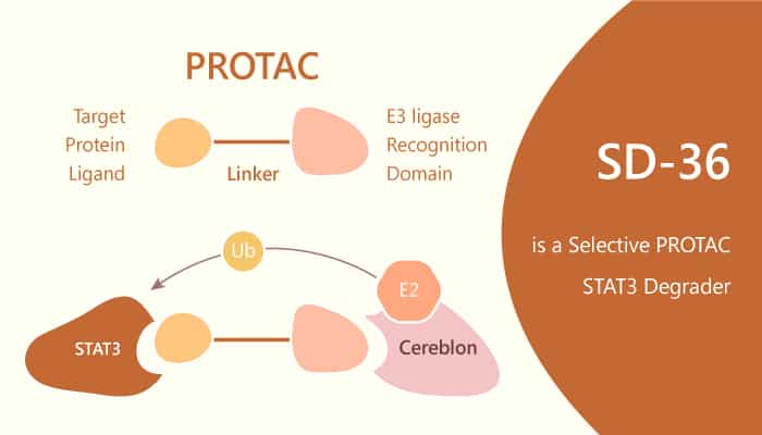 SD 36 is a Selective PROTAC STAT3 Degrader 2019 12 6 - SD-36 is a Selective PROTAC STAT3 Degrader