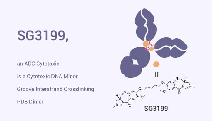 SG3199 an ADC Cytotoxin is a Cytotoxic DNA Minor Groove Interstrand Crosslinking PDB Dimer 2021 07 12 - SG3199, an ADC Cytotoxin, is a Cytotoxic DNA Minor Groove Interstrand Crosslinking PDB Dimer