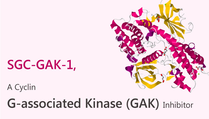 SGC GAK 1 Cyclin G associated kinase GAK Inhibitor prostate cancer 2019 04 07 - A Cyclin G-associated kinase (GAK) Inhibitor SGC-GAK-1