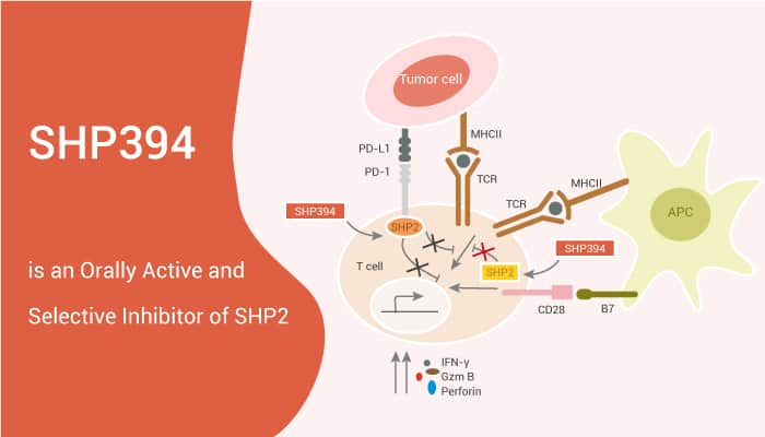 SHP394 is an Orally Active and Selective Inhibitor of SHP2 2021 05 08 - SHP394 is an Orally Active and Selective Inhibitor of SHP2