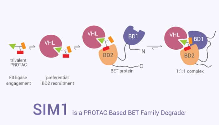 SIM1 is a PROTAC Based BET Family Degrader 2021 08 11 - SIM1 is a PROTAC Based BET Family Degrader