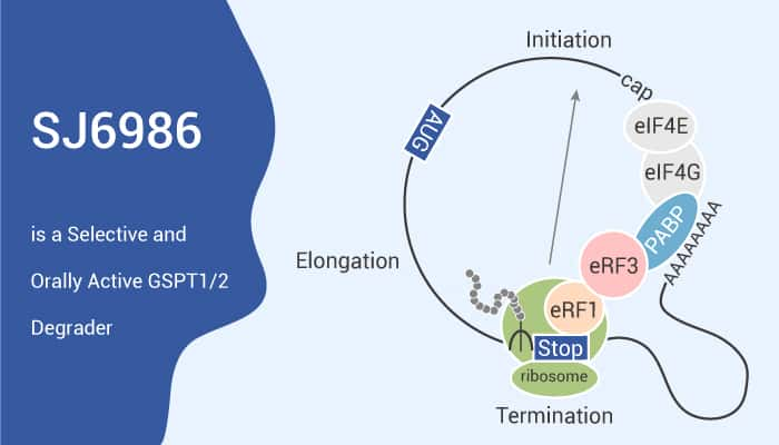 SJ6986 is a Selective and Orally Active GSPT1 2 Degrader 2021 07 16 - SJ6986 is a Selective and Orally Active GSPT1/2 Degrader