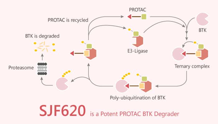 SJF620 is a Potent PROTAC BTK Degrader 2020 09 26 - SJF620 is a Potent PROTAC BTK Degrader