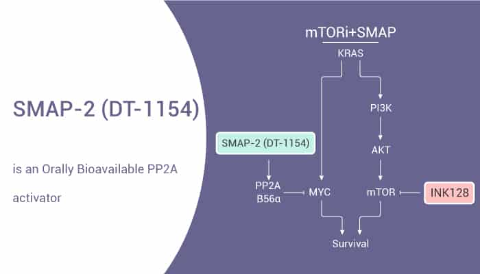 SMAP 2 DT 1154 is an Orally Bioavailable PP2A Activator 2021 06 01 - SMAP-2 (DT-1154) is an Orally Bioavailable PP2A Activator
