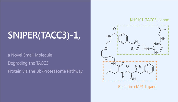 SNIPERTACC3 1 a Novel Small Molecule Degrading the TACC3 Protein via the Ubiquitin proteasome Pathway 2019 05 26 - SNIPER(TACC3)-1, a Novel Small Molecule Degrading the TACC3 Protein via the Ubiquitin-proteasome Pathway