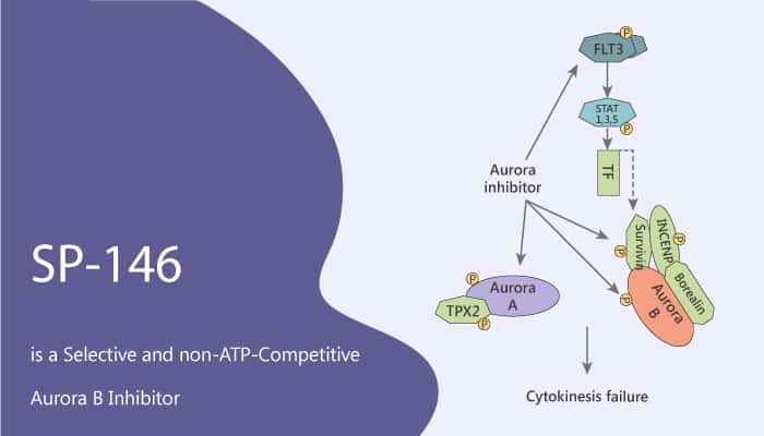 SP 146 is a Selective and non ATP Competitive Aurora B Inhibitor 2020 08 19 - SP-146 is a  Selective and non-ATP-Competitive Aurora B Inhibitor