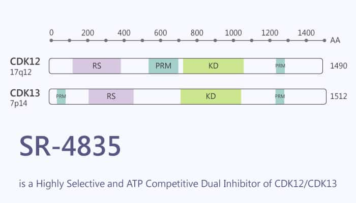 SR 4835 is a highly Selective and ATP Competitive Dual Inhibitor of CDK12 CDK13 2019 12 07 - SR-4835 is a Highly Selective and ATP Competitive Dual Inhibitor of CDK12/CDK13