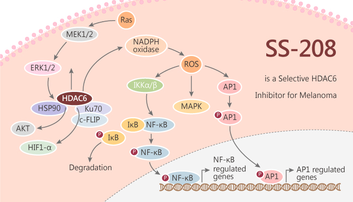 SS 208 is a Selective HDAC6 Inhibitor for Melanoma 2019 09 26 - SS-208 is a Selective HDAC6 Inhibitor for Melanoma