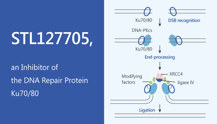 STL127705 Inhibitor of the DNA Repair Protein Ku7080 2019 05 17 - STL127705, an Inhibitor of the DNA Repair Protein Ku70/80
