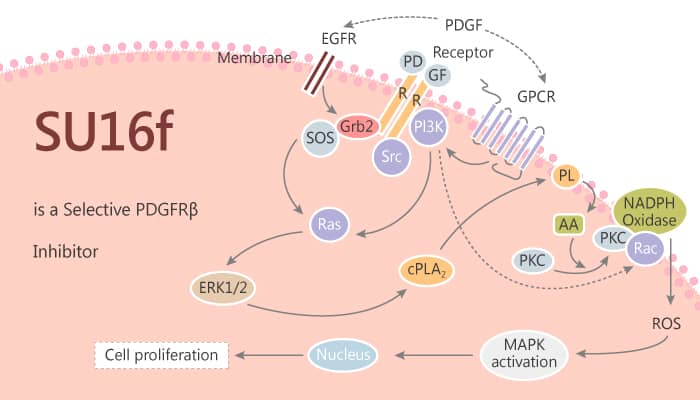SU16f is a Selective PDGFRβ Inhibitor for Gastric Cancer Therapy 2019 11 13 - SU16f is a Selective PDGFRβ Inhibitor for Gastric Cancer Therapy
