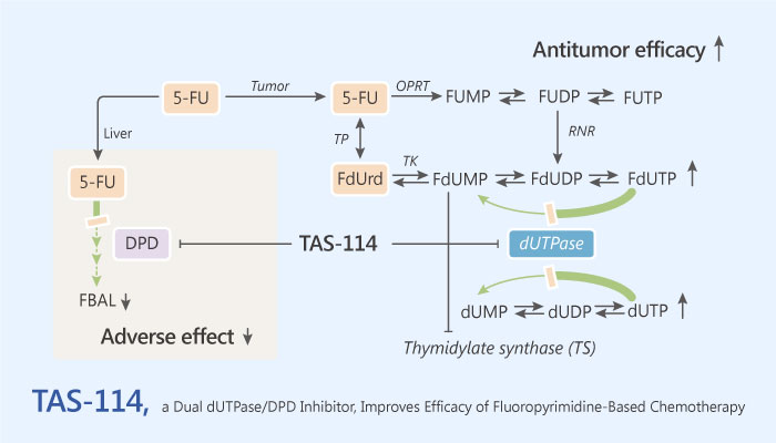 TAS 114 a Dual dUTPase DPD Inhibitor Improves Therapeutic Efficacy of Fluoropyrimidine Based Chemotherapy 2019 05 28 - TAS-114, a Dual dUTPase/DPD Inhibitor, Improves Therapeutic Efficacy of Fluoropyrimidine-Based Chemotherapy