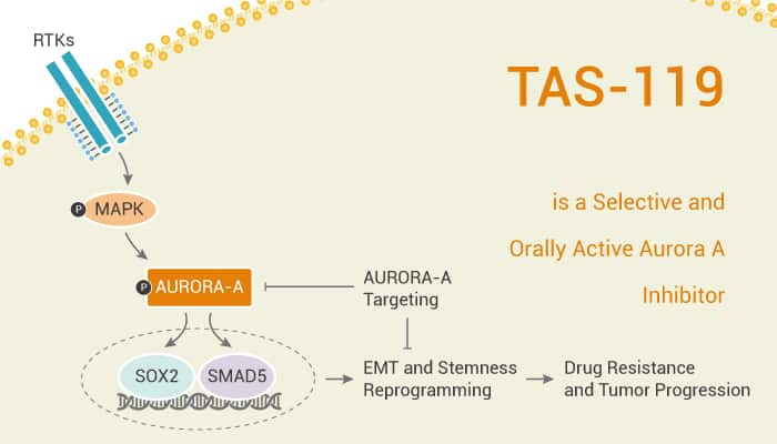 TAS 119 is a Selective and Orally Active Aurora A Inhibitor 2021 02 27 - TAS-119 is a Selective and Orally Active Aurora A Inhibitor