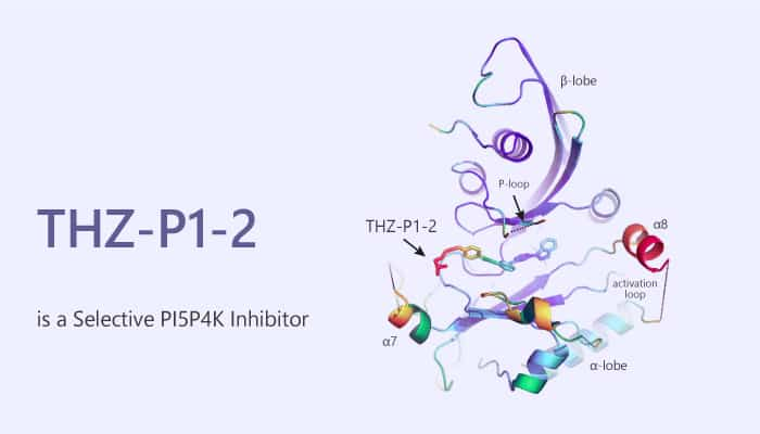 THZ P1 2 is a Selective PI5P4K Inhibitor 2020 06 10 - THZ-P1-2 is a Selective PI5P4K Inhibitor