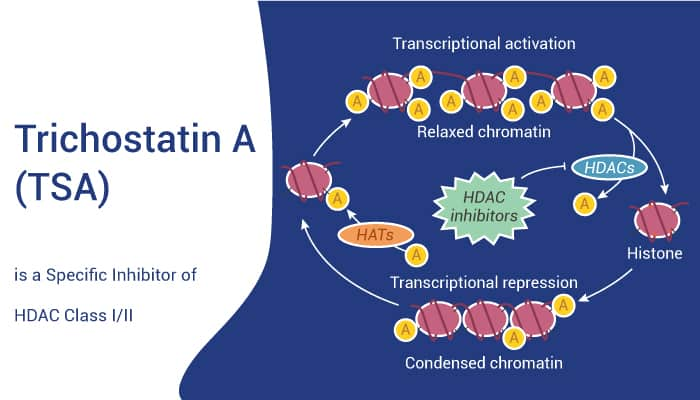 Trichostatin A TSA is a Specific Inhibitor of HDAC Class III 2021 08 31 - Trichostatin A (TSA) is a Specific Inhibitor of HDAC Class I/II