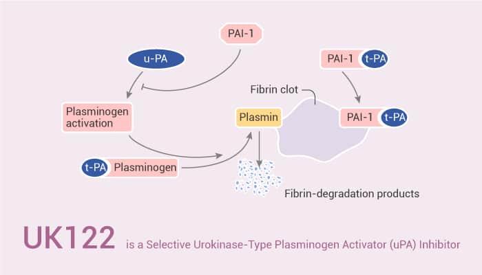 UK122 is a Selective Urokinase Type Plasminogen Activator uPA Inhibitor 2021 07 29 - UK122 is a Selective Urokinase-Type Plasminogen Activator (uPA) Inhibitor