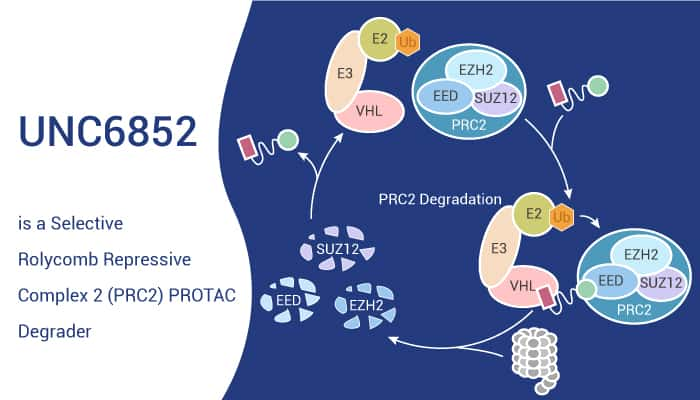 UNC6852 is a selective Rolycomb Repressive Complex 2 PRC2 PROTAC Degrader 2020 11 26 - UNC6852 is a Selective Rolycomb Repressive Complex 2 (PRC2) PROTAC Degrader