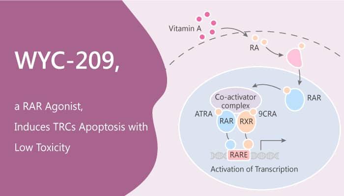 WYC 209 a RAR Agonist Induces TRCs Apoptosis with Low Toxicity 2019 07 13 - WYC-209, a RAR Agonist, Induces TRCs Apoptosis with Low Toxicity
