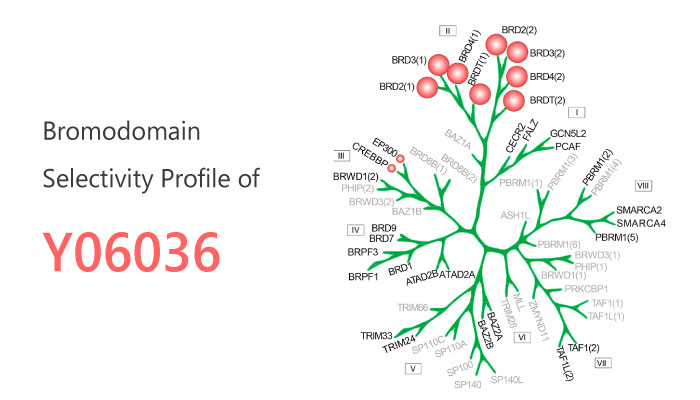 Y06036 BET Inhibitor Prostate Cancer2019 04 20 - A Novel Potent and Specific BET Inhibitor Y06036 For Prostate Cancer