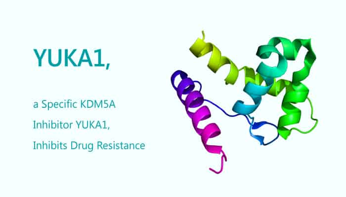 YUKA1 a Specific KDM5A inhibitor Inhibits Drug Resistance 2019 09 09 - YUKA1, a Specific KDM5A Inhibitor, Inhibits Drug Resistance