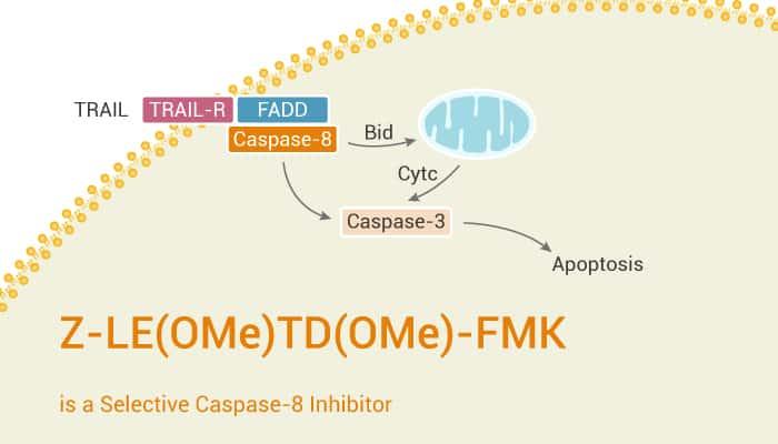 Z LEOMeTDOMe FMK is a Selective Caspase 8 Inhibitor 2021 03 16 - Z-LE(OMe)TD(OMe)-FMK is a Selective Caspase-8 Inhibitor