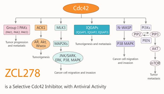 ZCL278 is a Selective Cdc42 Inhibitor with Antiviral Activity 2020 03 14 - ZCL278 is a Selective Cdc42 Inhibitor, with Antiviral Activity